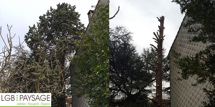 arbre-élagué